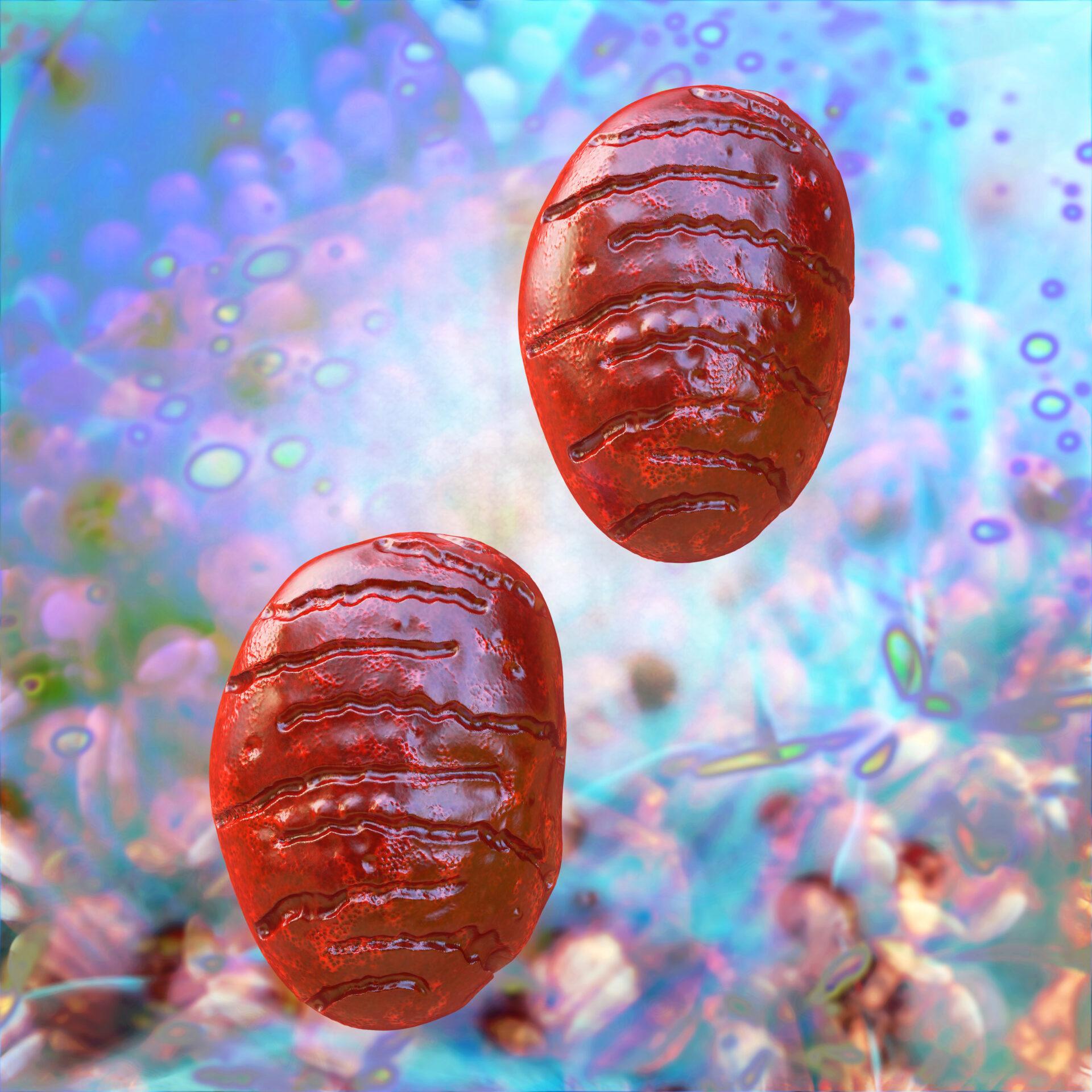 Mitochondrium - 3d Render